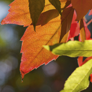 AboutPage4 Fall Image